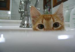 Dicas para dar banho nos seus gatos