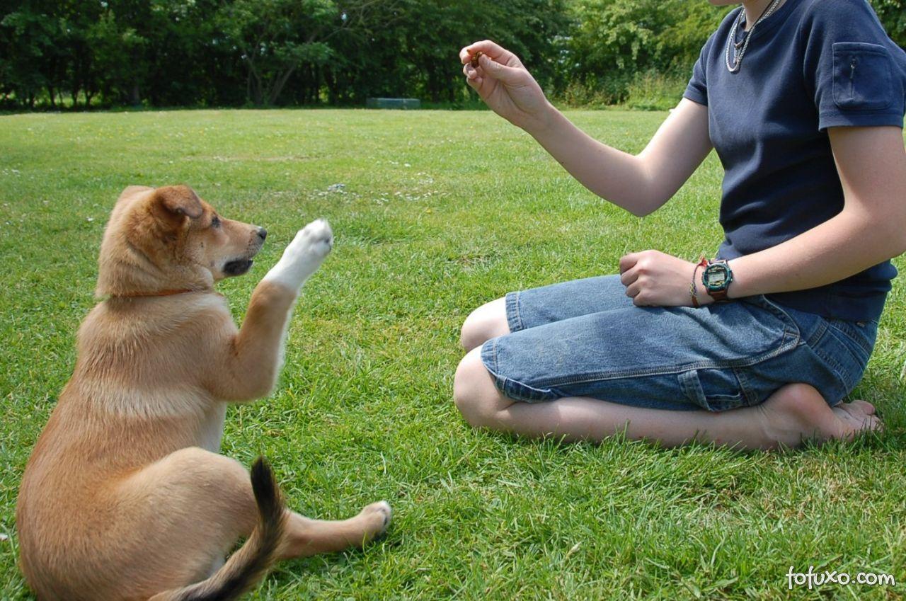 Ensinando truques básicos para seu cachorro