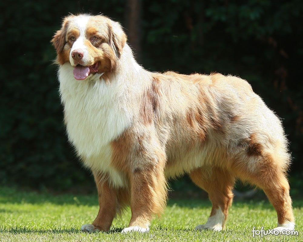 As dez raças de cães mais inteligentes