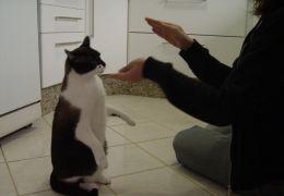 Dicas de adestramento para gatos