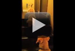 Vídeo: Filhote com medo de escada