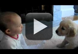 Vídeo: Filhote e bebê se encontram pela primeira vez
