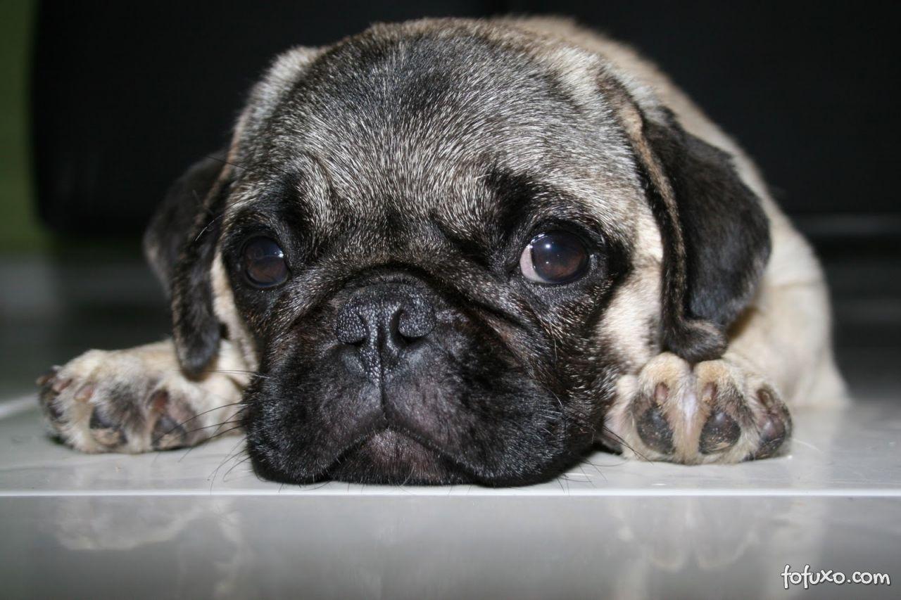 Saiba mais sobre a Tosse dos Canis