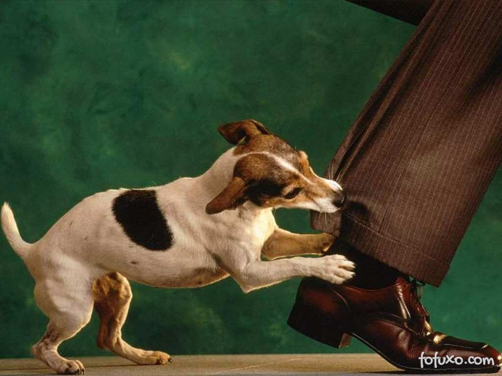 Dicas para lidar com cães compulsivos