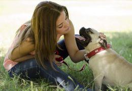 Suplementação animal é necessária?