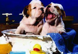Banho seco caseiro para cães