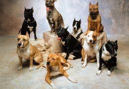 """Dicas de adestramento de cães: Exercício """"Junto"""""""