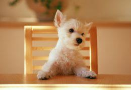 Podemos dar ração de gato para o cachorro?