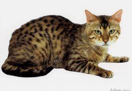 Gato de bengala (Bengal)