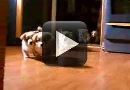 Vídeo: Corrida de filhotes