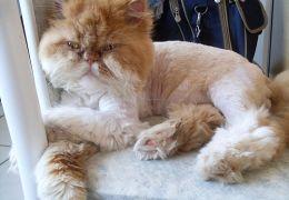 Dicas de tosa e escovação de gatos