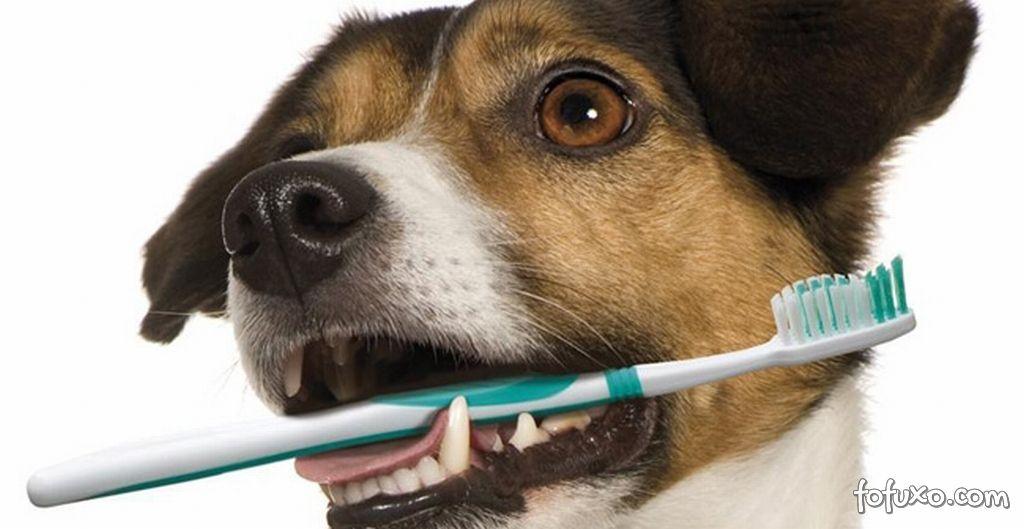 Cuidados com os dentes do seu pet
