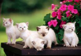 Dicas para cuidar dos filhotes de gatos