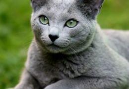 Azul Russo