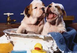 Dicas para dar banho no seu cão em casa