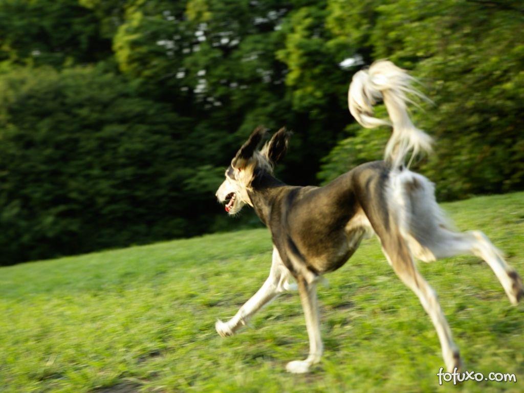 Mantenha seu cão ativo e saudável
