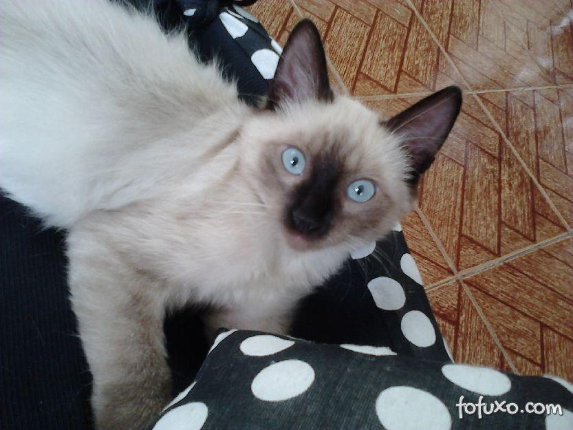 O que fazer quando um gato se perde?