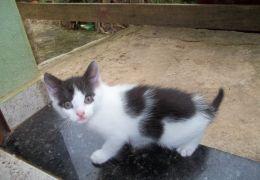 Dicas gerais para cuidar dos gatos filhotes