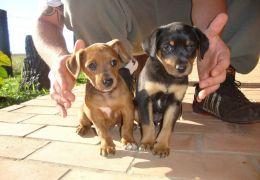 Como lidar com cães recém adotados