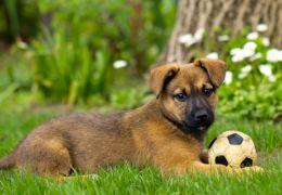 Brincadeiras para acalmar o seu cão