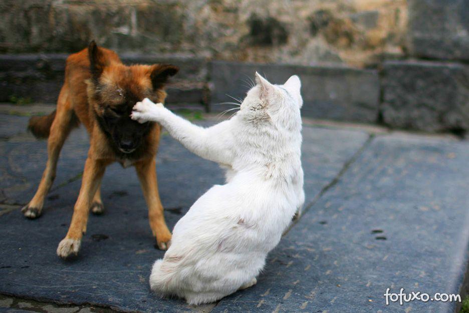 Cães e gatos também sofrem com estresse