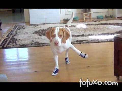 Cãozinho com Tênis All Star