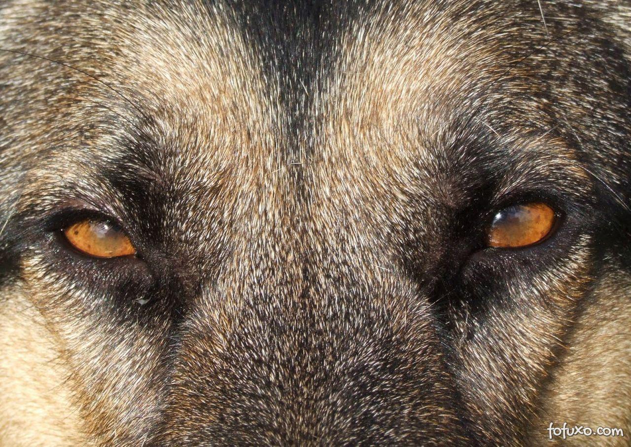 Aluguel de cachorros faz sucesso na Coreia do Sul