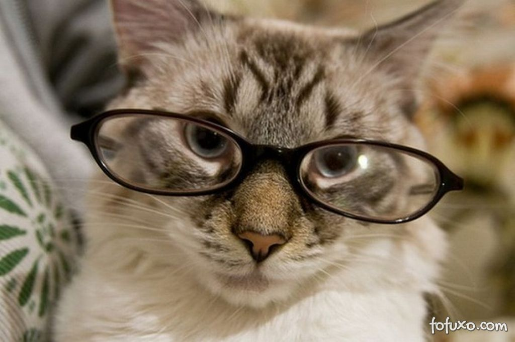 Dicas de relacionamento com gatos na terceira idade