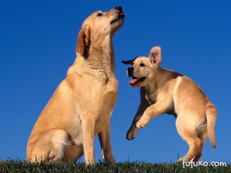 A sua idade e a idade do seu cão