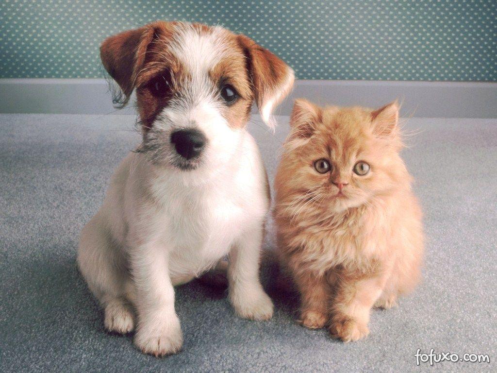Polêmica sobre uso de animais em cursos de medicina