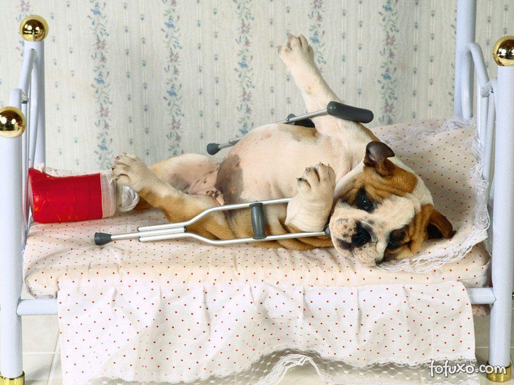 Ajude seu animal doente