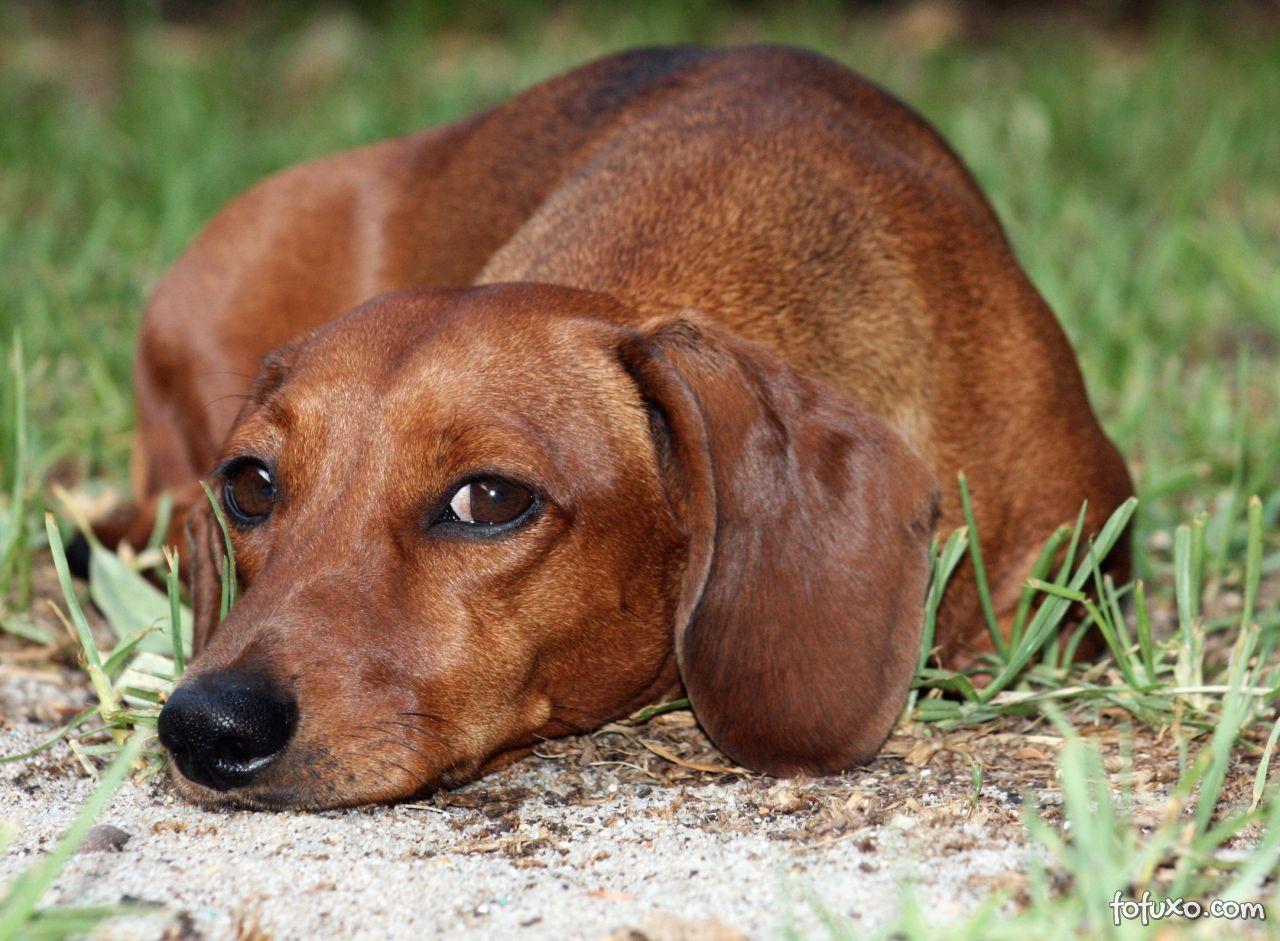 Por que os cães se esfregam nas pernas da visita ou na dos próprios donos?