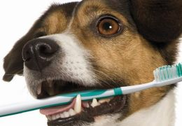Escovando os dentes do seu cão