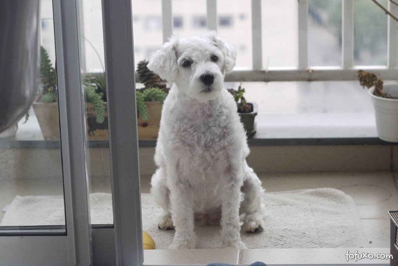 Animais domésticos em condomínios não podem ser proibidos