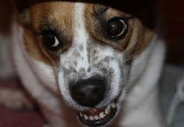 Dicas para lidar com a agressividade repentina dos cães