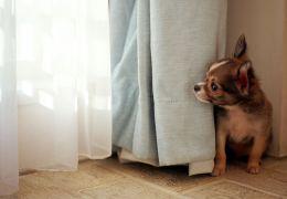 Cães medrosos