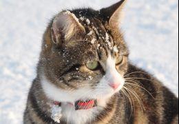 Cuidados com os gato no inverno