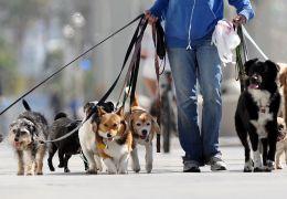 Passeando com o seu cão