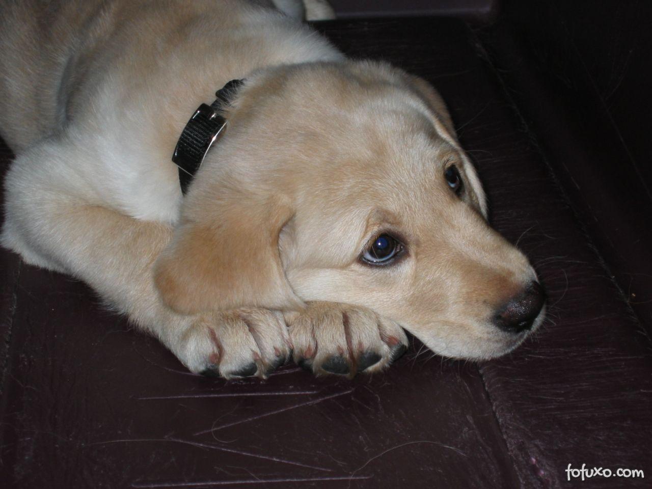 Alzheimer em cães