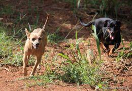 Dicas para evitar conflitos entre cães