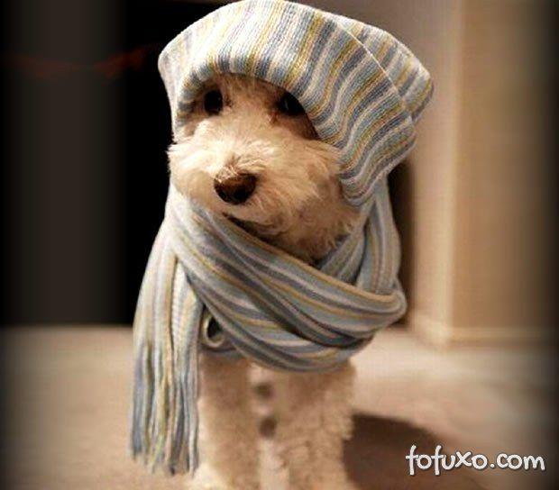 O que fazer com os cães durante as féria se julho?