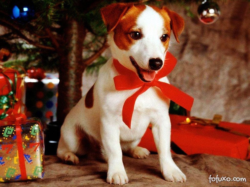 Dicas de presentes para o seu pet
