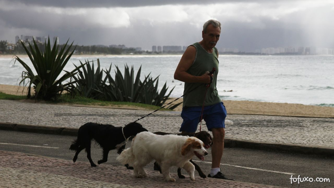 Motivos para passear com o seu cão