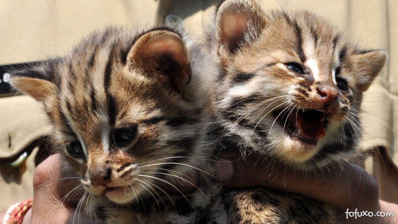 Dicas para acabar com as brigas entre gatos