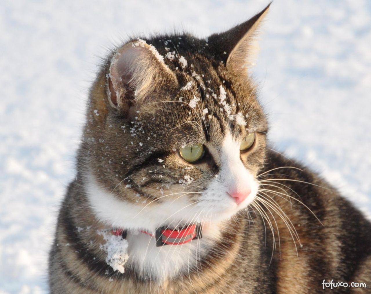 Gatos no inverno