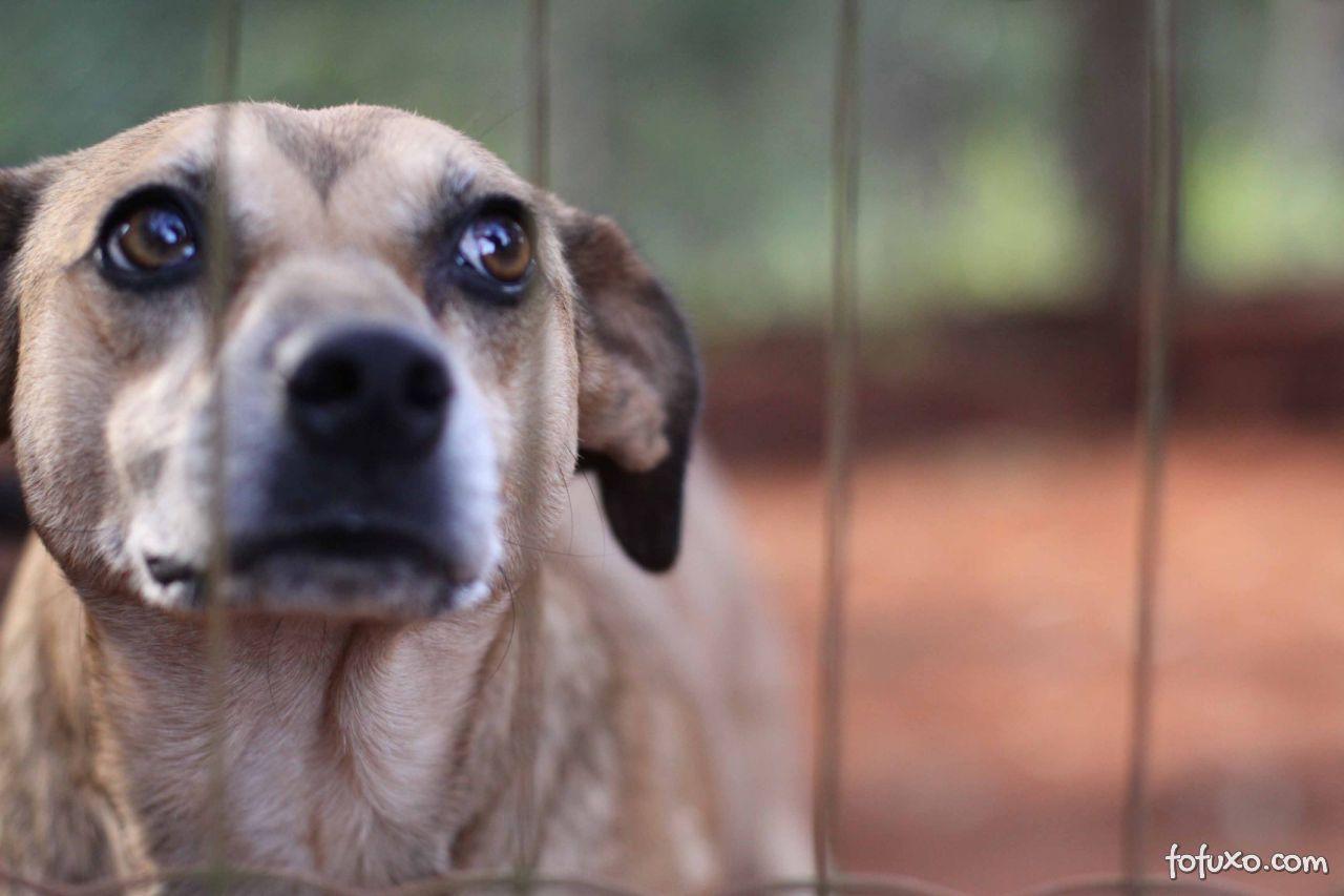 Contra a violência aos animais