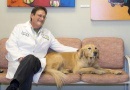 Diagnóstico precoce do câncer aumenta chance de curas em animais