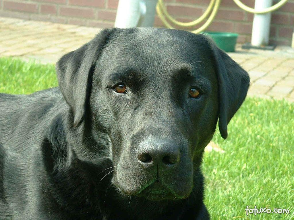 Cachorro seria capaz de farejar câncer