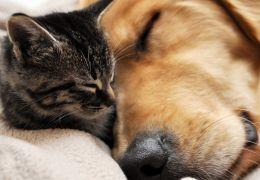 O que fazer quando seu pet fica triste?