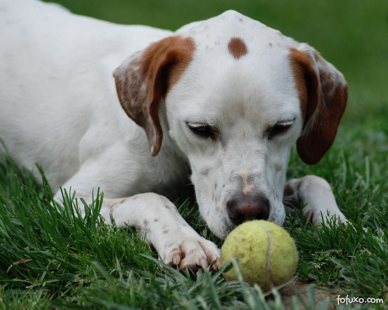 Brincando com o seu cão: Trazendo a bolinha
